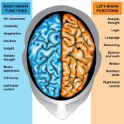right_left_brain